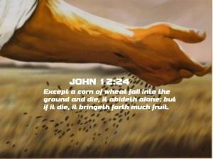 john12-24